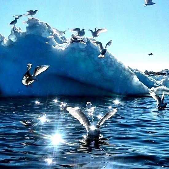Bird No People Sea Life Animal Togetherness Sky Animals In The Wild Animal Themes Animal Wildlife Icebiergs Greenland