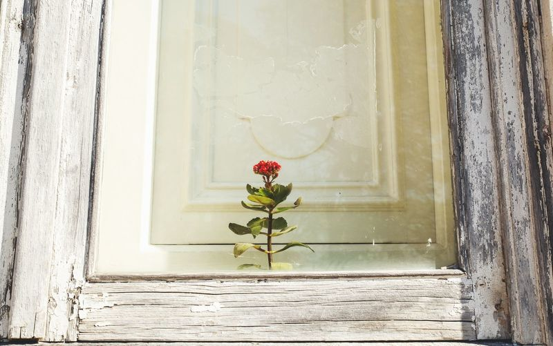 Close-up of flower vase on glass window