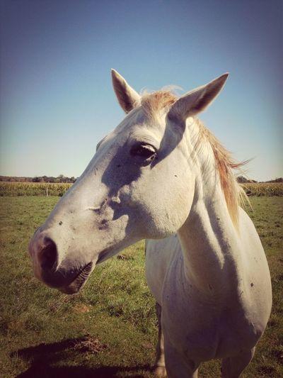 Magic Horse Kon-Tiki: Your Adventure