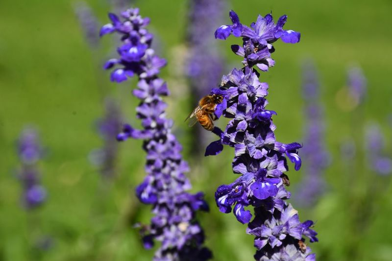 Flower Flowering Plant Invertebrate Insect Animal Wildlife Animals In The Wild Purple Plant Bee Vulnerability  Close-up Petal Flower Head One Animal Freshness Fragility Focus On Foreground Beauty In Nature Animal Themes Animal