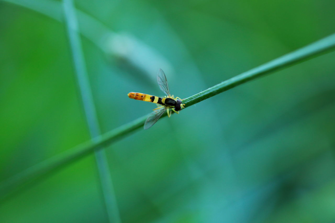 invertebrate, insect, animal wildlife, animals in the wild, one animal, animal themes, animal, green color, close-up, plant, day, no people, focus on foreground, animal wing, selective focus, nature, plant part, leaf, growth, zoology, outdoors, blade of grass