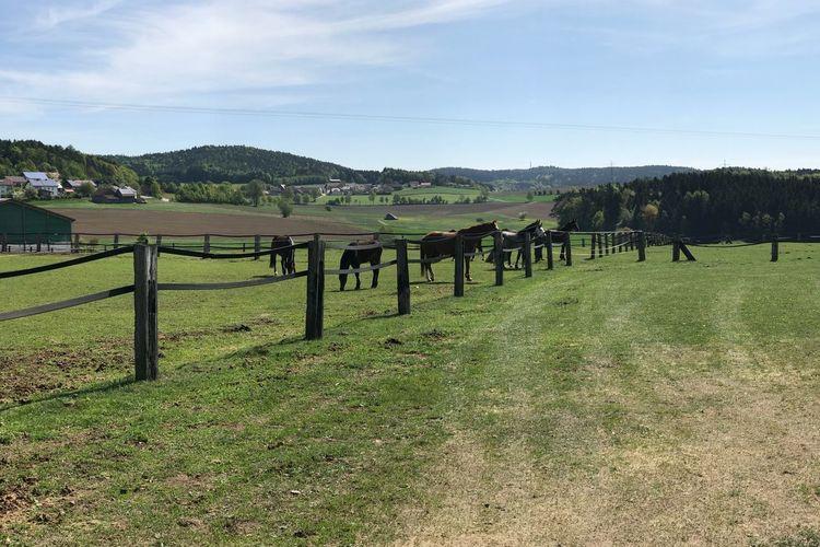 Horses Germany