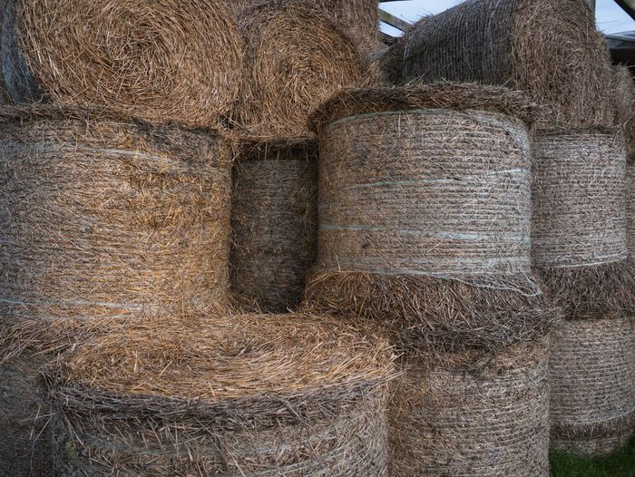 Hay Bails in Cowshed Cowshed Harvest Hay Bales Farm Full Frame Textured  No People Day Backgrounds Close-up Indoors  Nature