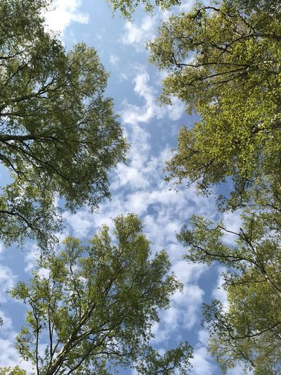 🌿 Tree Nature Sky Beauty In Nature Forest Cloud - Sky Day Freshness Springtime Green Color No Filter, No Edit, Just Photography