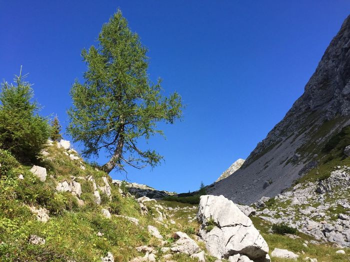 Low angle view of trees on mountain against clear blue sky