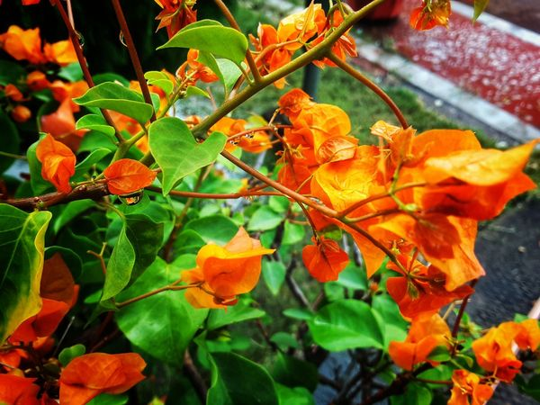 Leaf Nature Growth Outdoors Beauty In Nature Plant Day No People Autumn Close-up Freshness
