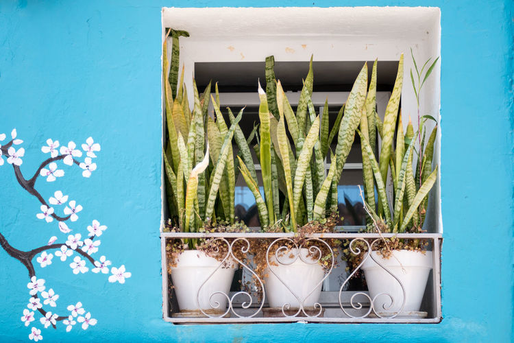 A window view Alicante Green SPAIN Travel Travel Photography Art Blue Calpe Container Growth Leaf Leaves Nature No People Painting Plant Plant Pot Plant Pots Potted Plant Still Life Three White Window Window Plants Window View