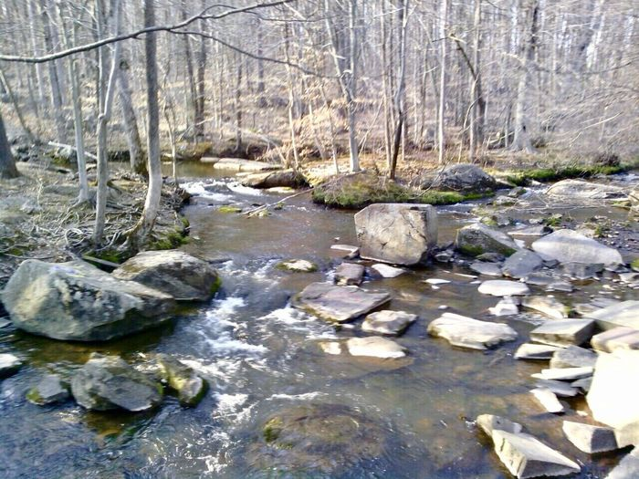 Nature Water Forest Bare Tree Tree No People Outdoors Tranquility Day Stream - Flowing Water Sky Pennsylvania Pennsylvania Landscape