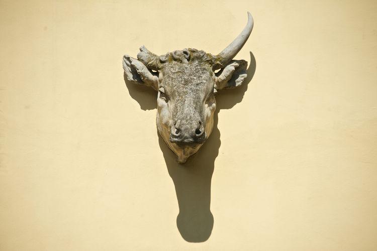 statue of animal head Animal Head  Bull - Animal Close-up Horned No People Outdoors Padova Portrait Shadows & Lights Slaughterhouse Statue Taurus Horn