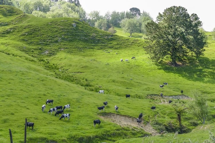 High angle view of horses grazing in field