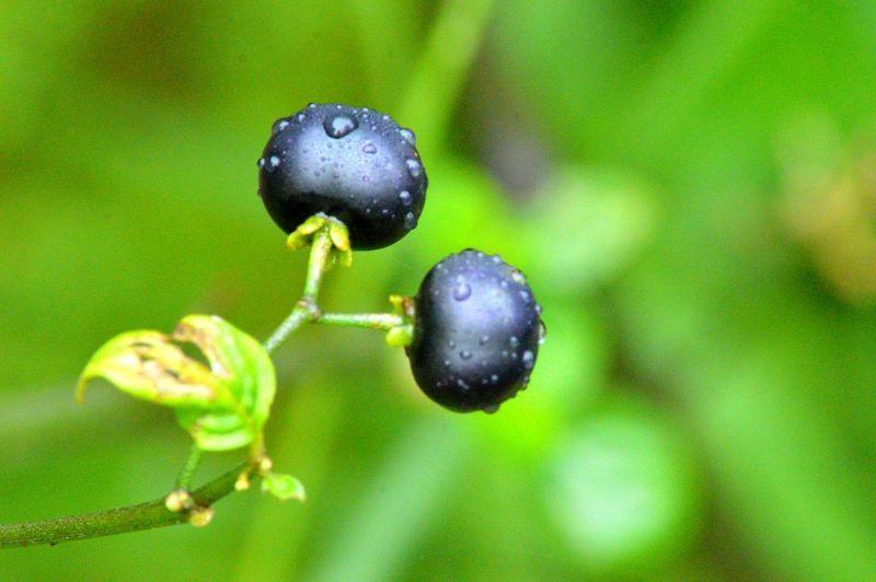 Growth Fruit