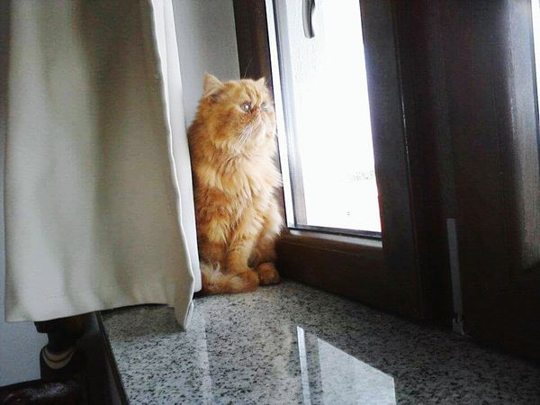 One Animal Window Pets Domestic Cat Home Interior Animal Themes Domestic Room Domestic Animals Domestic Cat Domestic Animals Cat Lovers Italia Milano