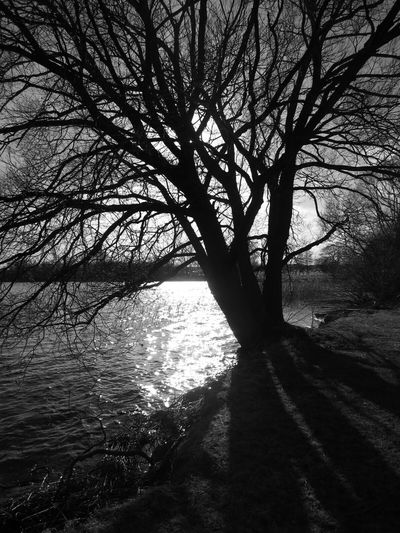 Blackandwhite Tree Silhouette Nature Reserve