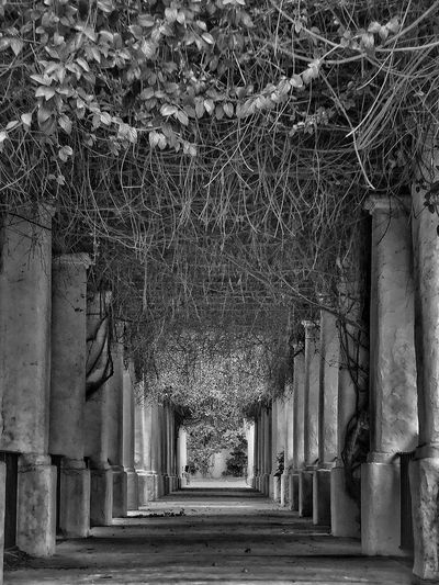 Park Architecture Built Structure No People Day Building Exterior Direction Outdoors Pattern The Way Forward Nature Tree In A Row Plant Building Low Angle View Wall - Building Feature History Architectural Column