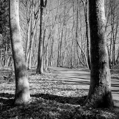 Bare Tree Black And White Blackandwhite Forest Lac De Malsaucy Tranquil Scene Tree Trunk Trees