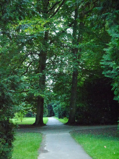 Path in the botanic garden of Stuttgart Hohenheim Beauty In Nature Crosing Day Decision Forest Green Green Color Growth Landscape Nature No People Outdoors Park The Way Forward Tranquility Tree