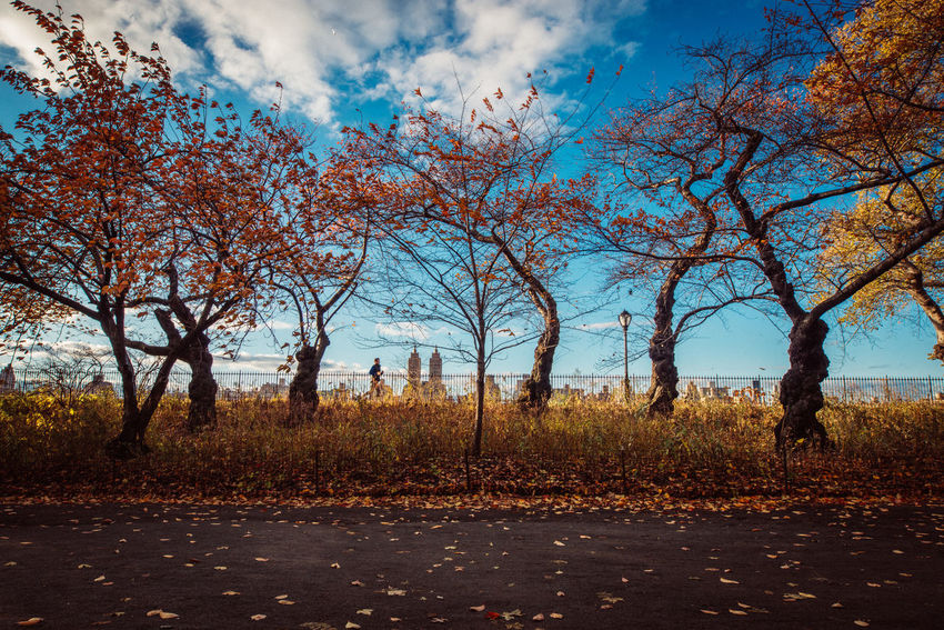 Central Park New York City Running Autumn Bare Tree Beauty In Nature Blue Sky Day Fall Landscape Nature Outdoors Scenics Sky Tranquility Tree An Eye For Travel Mobility In Mega Cities