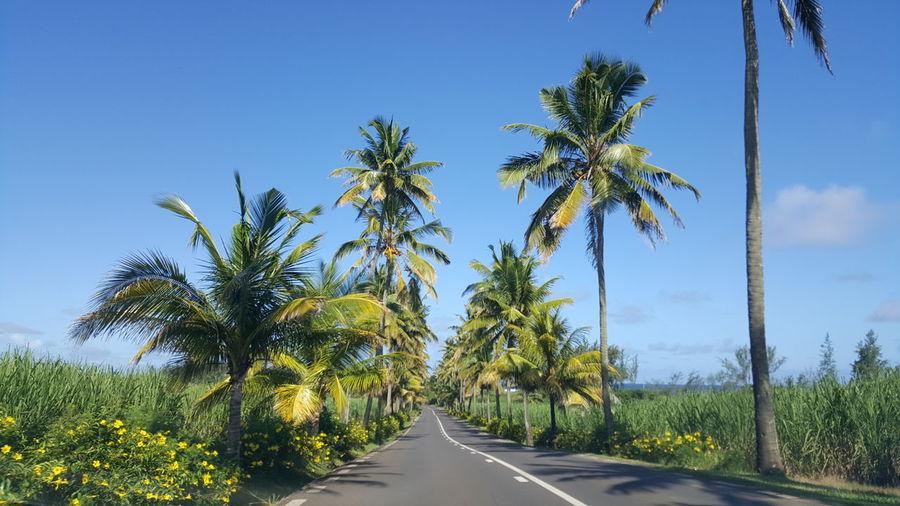 Mauritius road