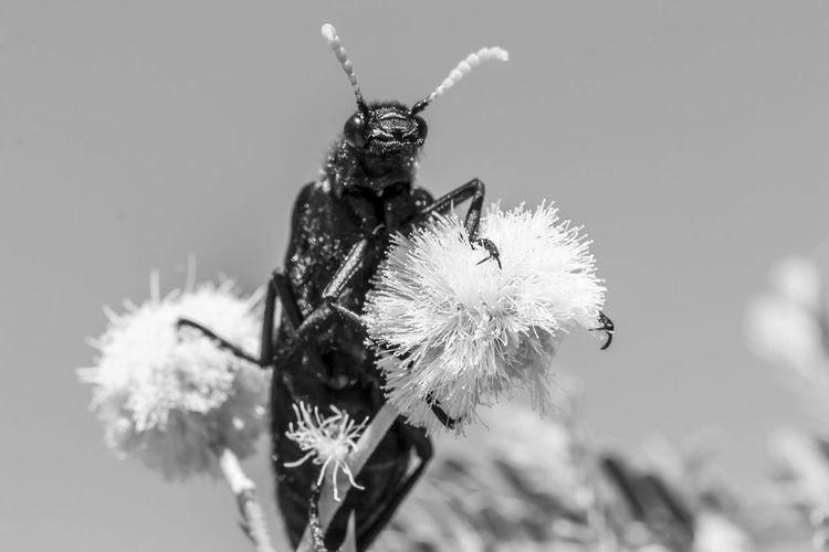 Close-up of insect on flower against sky