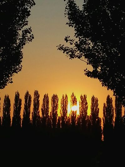 Sunset Trees And Sky Landscape