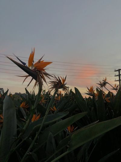 Los Angeles, California Sky Plant Growth Sunset Nature Beauty In Nature No People Tranquility Water Leaf Tranquil Scene Scenics - Nature Plant Part Animals In The Wild Close-up Clear Sky Silhouette Land Outdoors Autumn Mood A New Perspective On Life