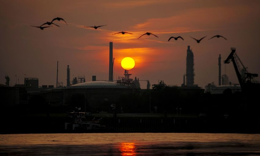 Entenflug am Rhein Gooses Family Entenfamilie Flugtag Bird Watching Urban Skyline Water Sunset Industry Silhouette River
