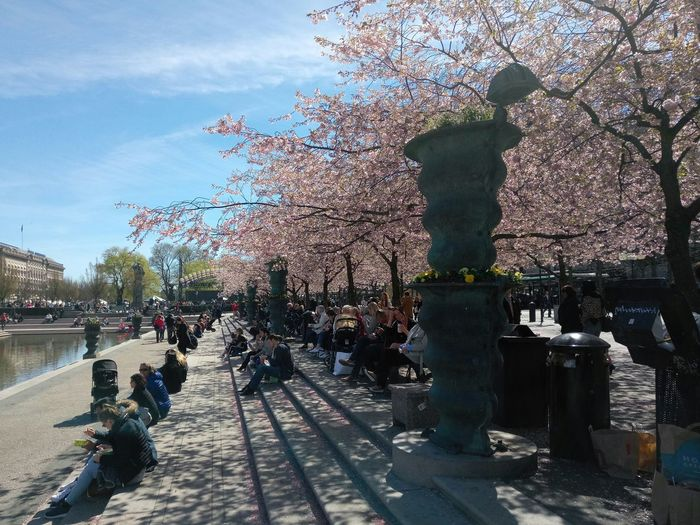 Sky Outdoors Shadow Day Tree Large Group Of People People Water Streetphotography Travel Destinations Outdoor Photography Stockholm Sweden Cherry Blossoms Cherry Tree Garden Flowers Street Photography