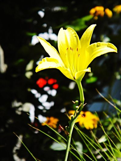 Nature is Healing... Flower Power🌼