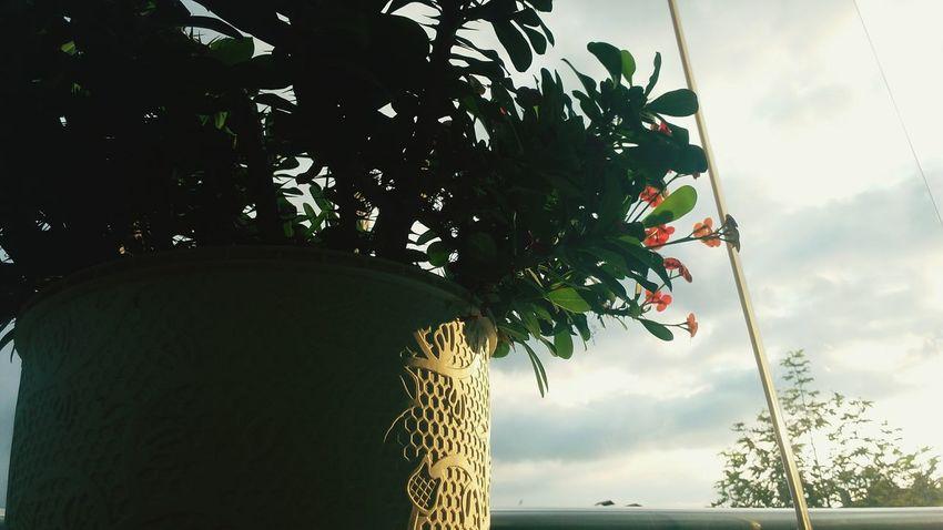 Sky No People Tree Plant First Eyeem Photo