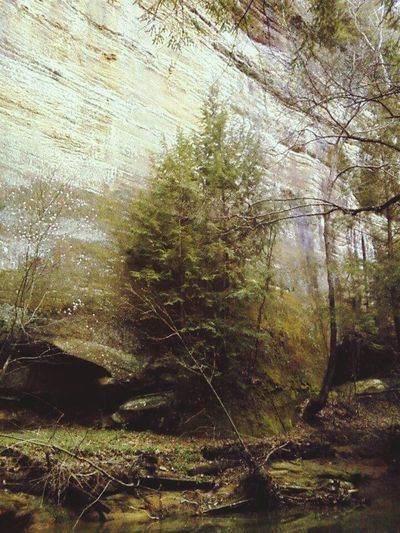 Nature Pine Tree Rock Formation Outdoors Beauty In Nature Mossyforest Old Mans Cave Hocking Hills Magical Forest Tranquil Scene Sunlight