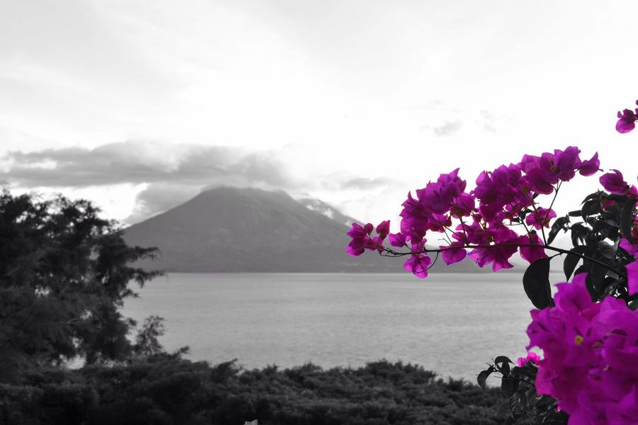 Lake Lago Lago De Atitlan