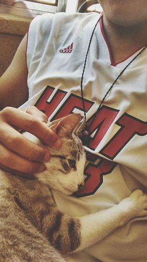 Melhor abraço!!!! Abraco Cat Friend Spiritualfriend Felino Animal Garo Hama Lovecats Loveanimals