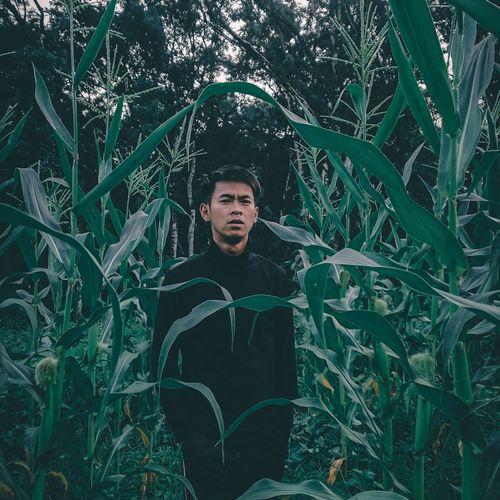 Nature corn