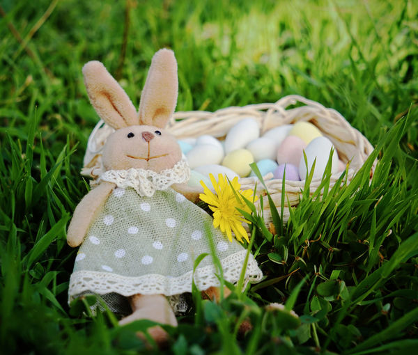 Background Candy Colors Easter Easter Bunnies  Easter Bunny Eggs Grass Hyacinth Nature Rabbit Ribbon Taking Photos Textile Texture Yellow Bow