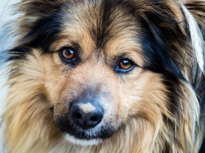 #dog #dogeyes #portrait Animal Eye Animal Hair Animal Nose Close-up Dog Looking At Camera Mammal No People One Animal Pets Portrait
