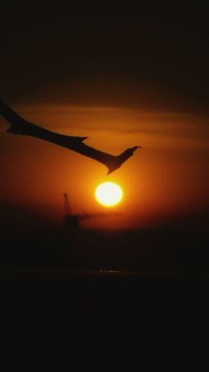 à prendre avec des pincettes... Transportation Air Vehicle Mode Of Transport Sunset Sun Silhouette Orange Color Flying Nature Sky No People Mid-air Outdoors Airplane Wing Day Journey Beauty In Nature Scenics