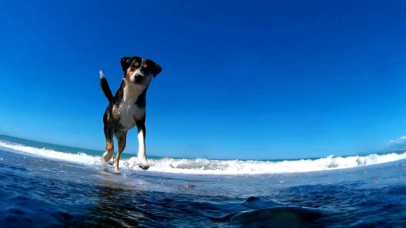 Beach Blue Dog Dogs Nature Sea Sky Water Dogslife Dogs Collection Sport Camera Dogslovers Dogslover Pet Portraits