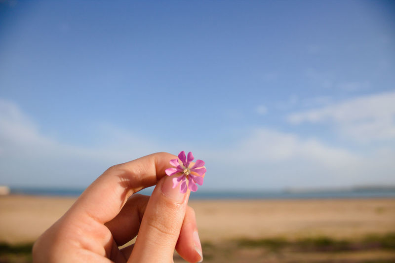 Close-up of hand holding pink flower against sky