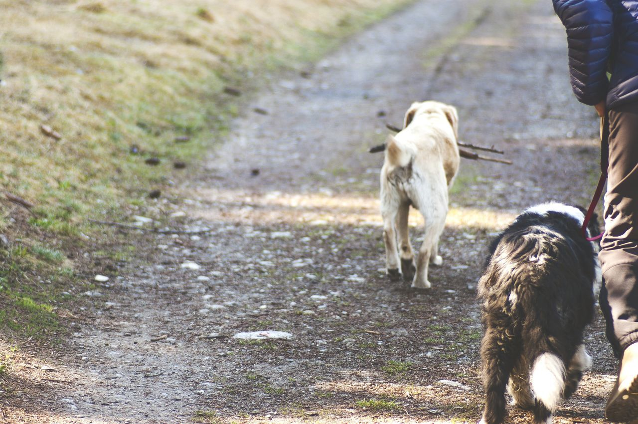 Rear view of dogs walking on road