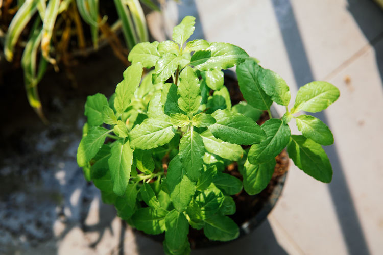 High angle view of leaves in potted plant
