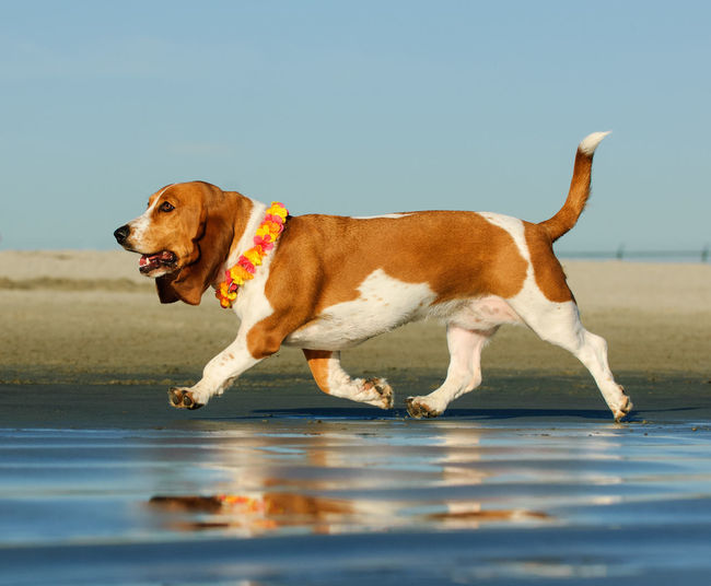 Side view of dog looking at beach