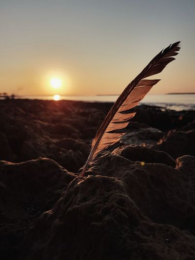 Close-up of feather at sunset