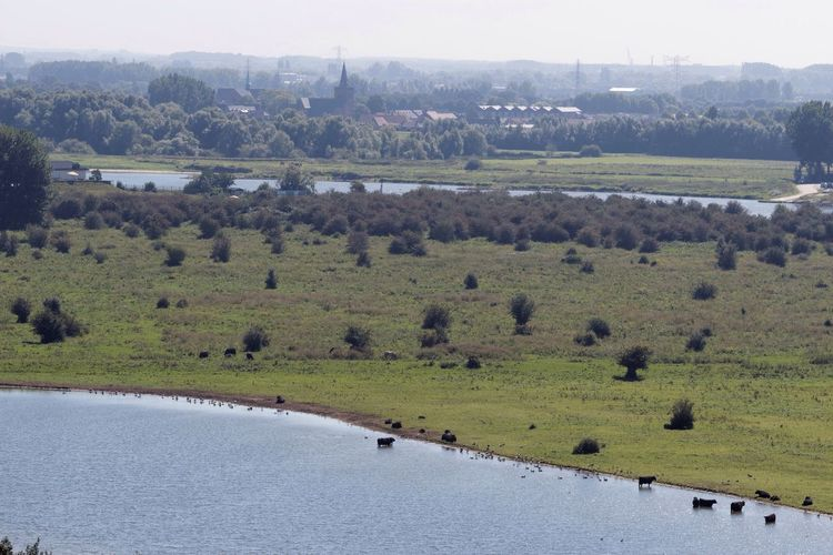 A Bird's Eye View Bird Photography Landscape Warm Day Lakeview Riverside Dutch Landscape Highland Cattle in the Lowlands Free Ranging Nature On Your Doorstep Animals In The Wild Waterscape