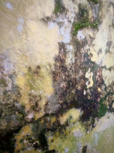 the Moss on the wall Moss Wall Wall - Building Feature Wall Textures Wall Background Painted Image Backgrounds Multi Colored Full Frame Abstract Close-up Built Structure
