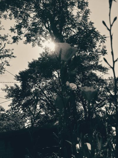 Flowers Flowers, Nature And Beauty Tree Shed Sky And Branches Sun Sun Beams Skyscape From Ground Noir Fine Art Photography