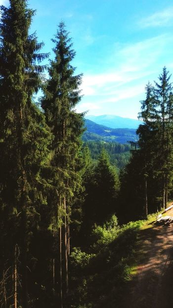 Forest Outdoors Nature Beauty In Nature No People Growth Mountain Sky Peace And Quiet Tranquility Steiermark Peaceful View Tranquil Scene
