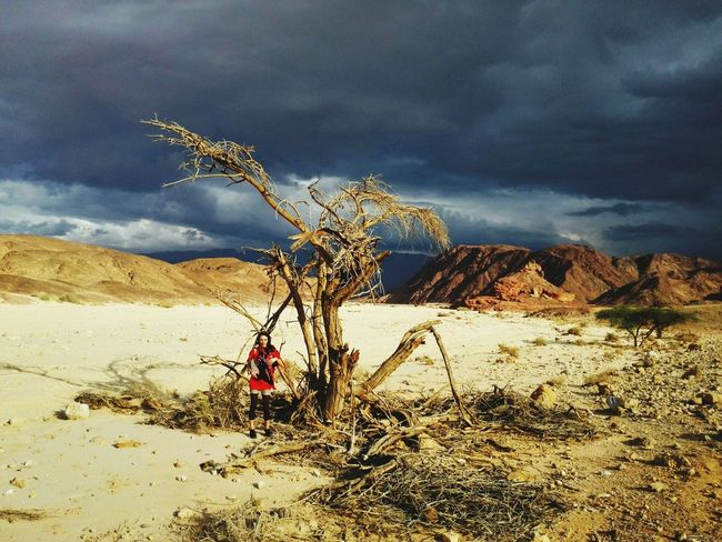 Sand Arid Climate Sky Sand Dune Desert Dead Plant Dried Plant