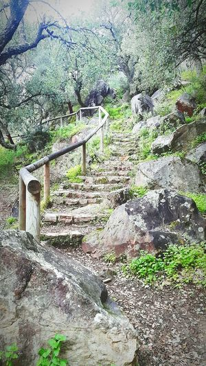 SPAIN Nature Mountain Earth Forrest Staircase Hiking❤ Jimena De La Frontera Hiking Trail Naturephotography Love Hiking Hiking View Hikinglife Alcornocales Looking For Adventures Hiking Adventures Life Nature Porn The KIOMI Collection