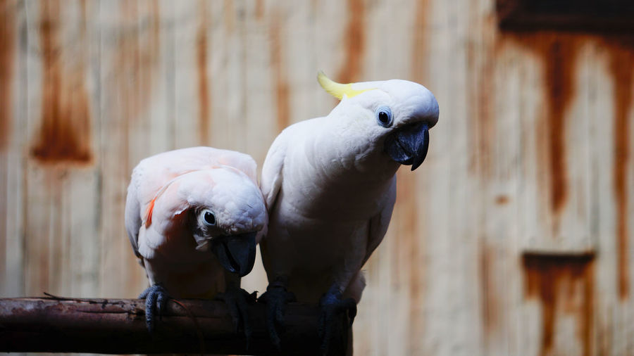 Close-up of two birds perching on wood