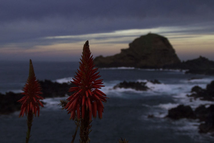 The Great Outdoors - 2019 EyeEm Awards Flowers Madeira Portugal Beauty In Nature Sunset Nature Water Sea Plant No People Scenics - Nature Growth Outdoors Close-up Travel Traveling EyeEm Best Shots EyeEm Nature Lover EyeEm Best Edits